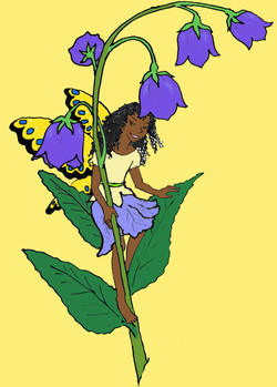Pic Fairy harebell color yelow bkrnd sho