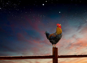 The Science Of Roosters