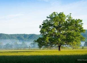 The Tiny Oak
