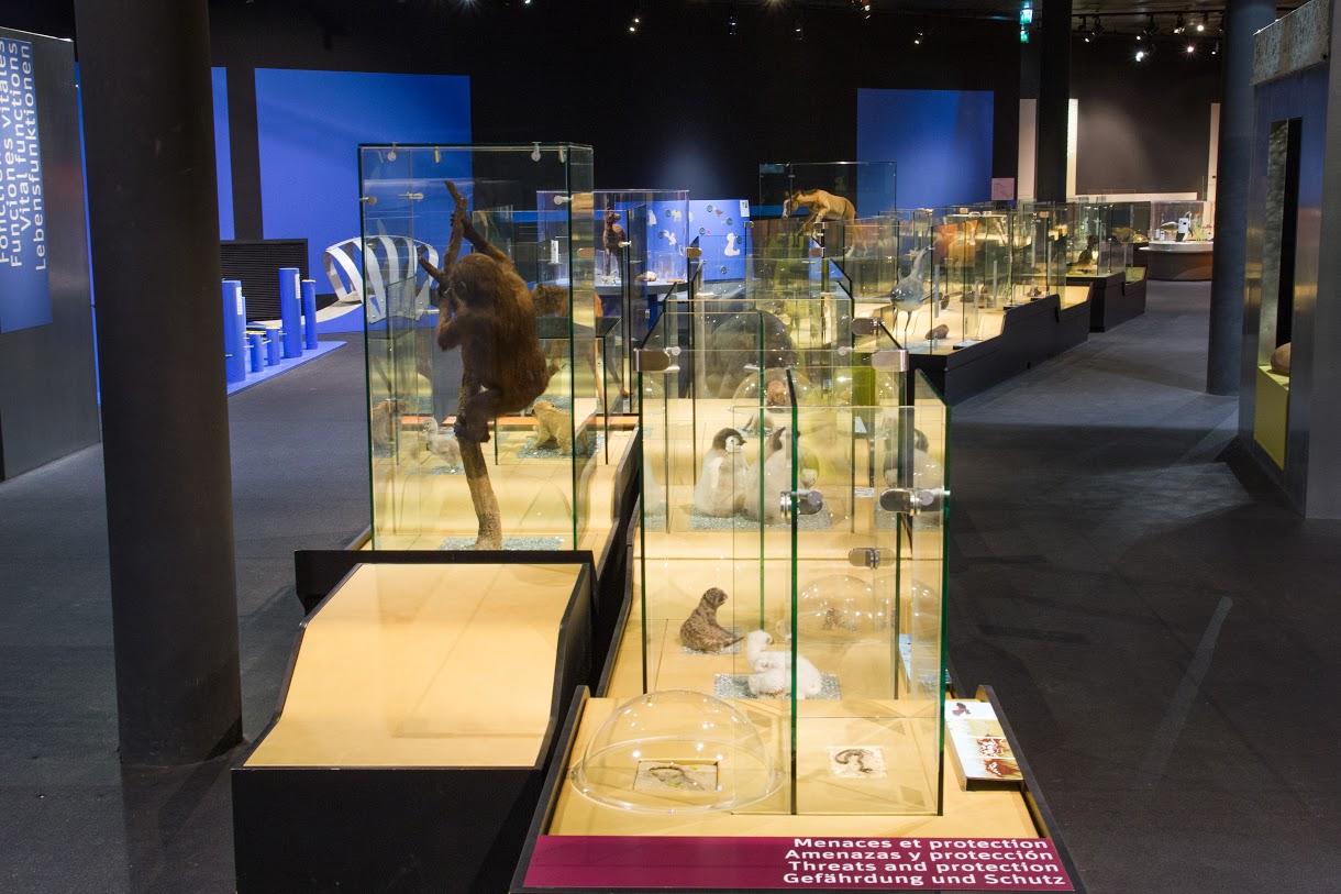 Bébés Animaux, Muséum de Bruxelles