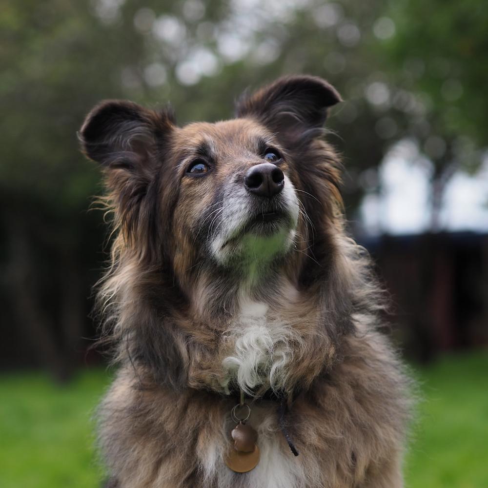 Dog portrait taken with M.Zuiko 45m f1.8 SCN People Olympus E-M10 MARK III