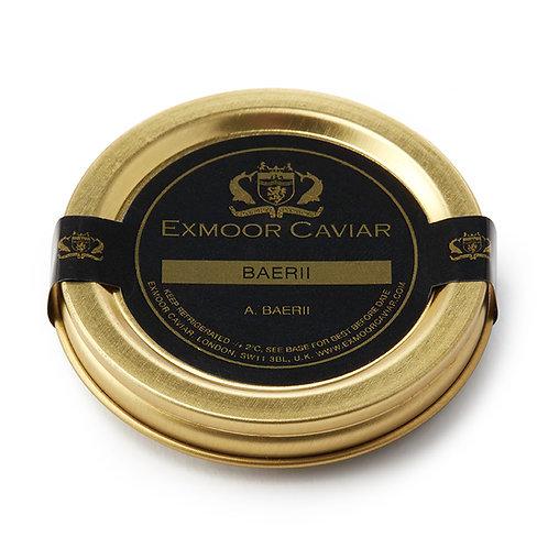 Exmoor Caviar - Baerii, 10g