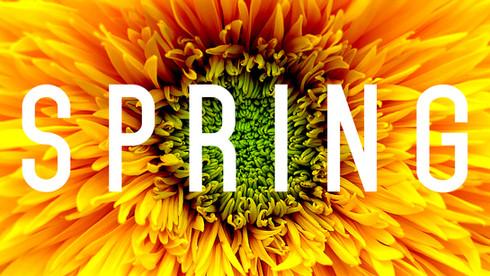 BOLDCreativeStudio_spring.jpg