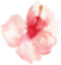 flower 12.png