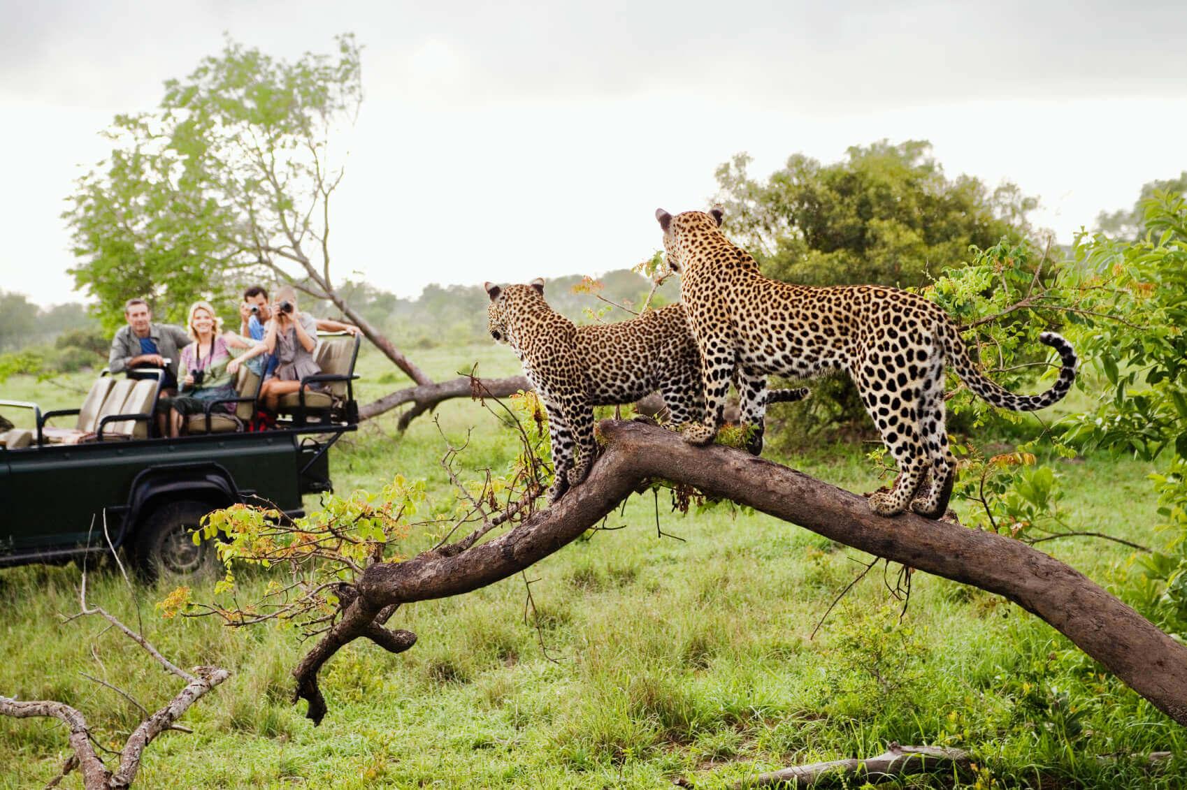 Family Wildlife Safari Tour