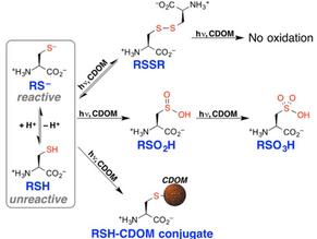 Aquatic photochemistry of cysteine