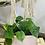 Thumbnail: סקנדס ירוק; אדנית עם תחתית