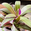 Thumbnail: יהודי נודד ״ננוק״; כלי חרס עם תחתית