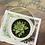 Thumbnail: צלינדר בטון משולב זכוכית עם סוקלנט זברה