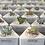 Thumbnail: סוקולנטים; משולש בטון