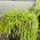 Thumbnail: ריפליס בכלי שחור פסים עם תחתית