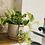 Thumbnail: פוטוס מגוון;כלי חרס ורוד טרצו עם תחתית
