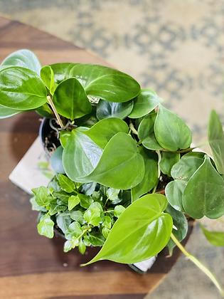 מיקס צמחי בית