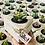 Thumbnail: מיתוגים: משולשי בטון עם סוקולנטים