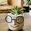 Thumbnail: סוקולנטים;נבו; כלי חרס משקפיים