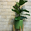 Thumbnail: פיקוס כינורי; כלי חרס ירוק עם רגלי עץ