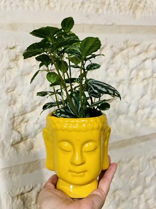 בודהה מאוהבת