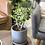 Thumbnail: עץ זית; כלי חרס חרדל
