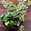 Thumbnail: מיקס צמחי בית