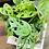 Thumbnail: מונסטרה מנקי; כלי ירוק טרצו עם מעמד