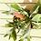 Thumbnail: קרן אייל עציץ 20
