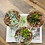 Thumbnail: סוקלנטים; טריו טרריום מושלם