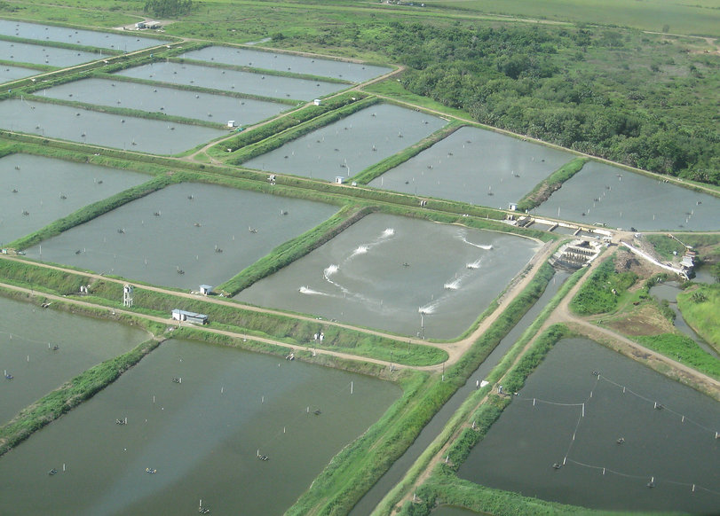 Shrimp farm in Guatemala-web.JPG