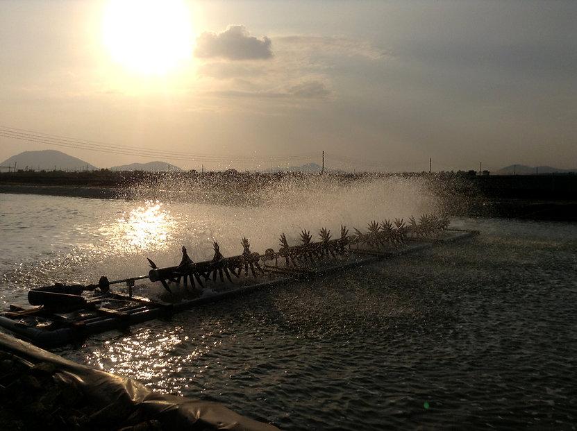 Aerators great shot  Vietnamese pond-web