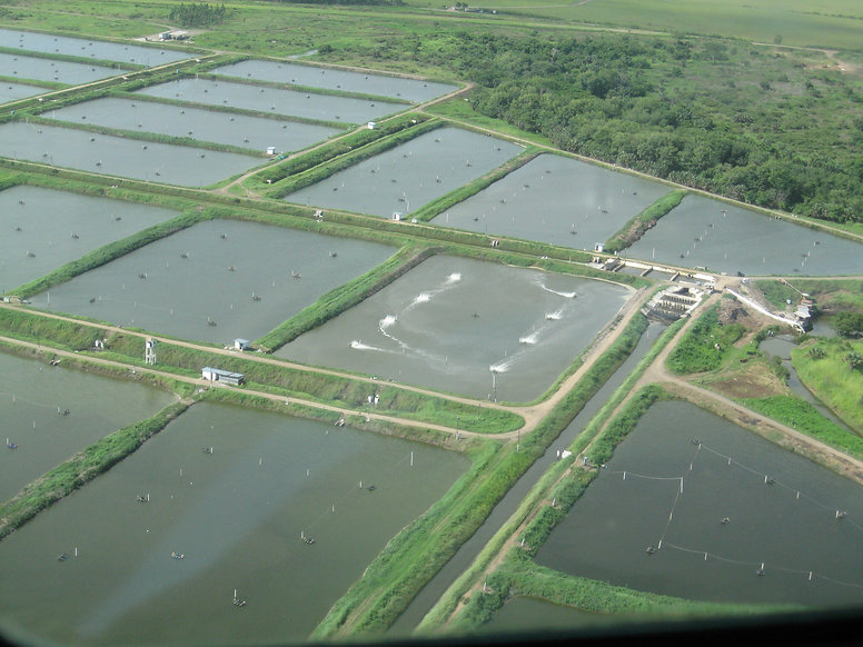 Shrimp farm with ponds from the air Beli