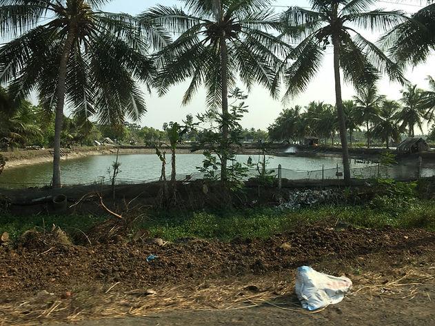 Small shrimp pond India-web.JPG