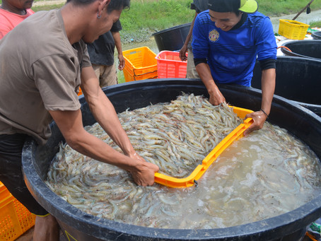 Why Sustainable Aquaculture May Be Elusive?
