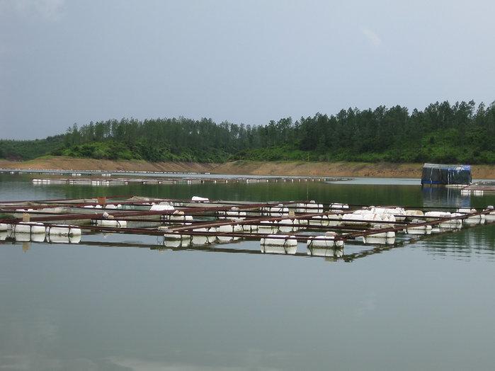 tilapia cage culture reservoir.jpg