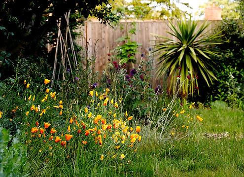 Bircham garden-5503 - credit Lesley van