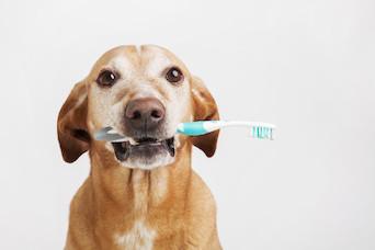 Dog Dental_Feature.jpg