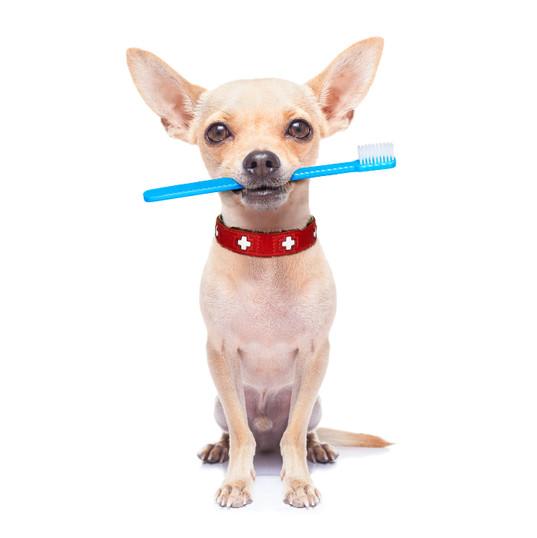 dog-teeth-cleaning.jpg