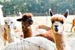 Carolina Pride Pastures South Carolina A