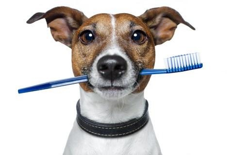 dental_dog.jpg