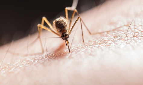 mosquito-biting-on-skin-2382223.jpg