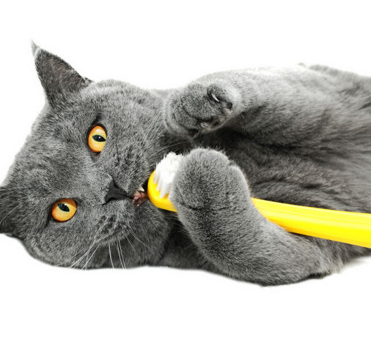 toothbrushcat.jpg