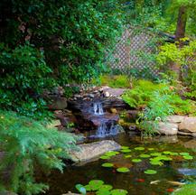 Garden w/ Koi Pond & Waterfall