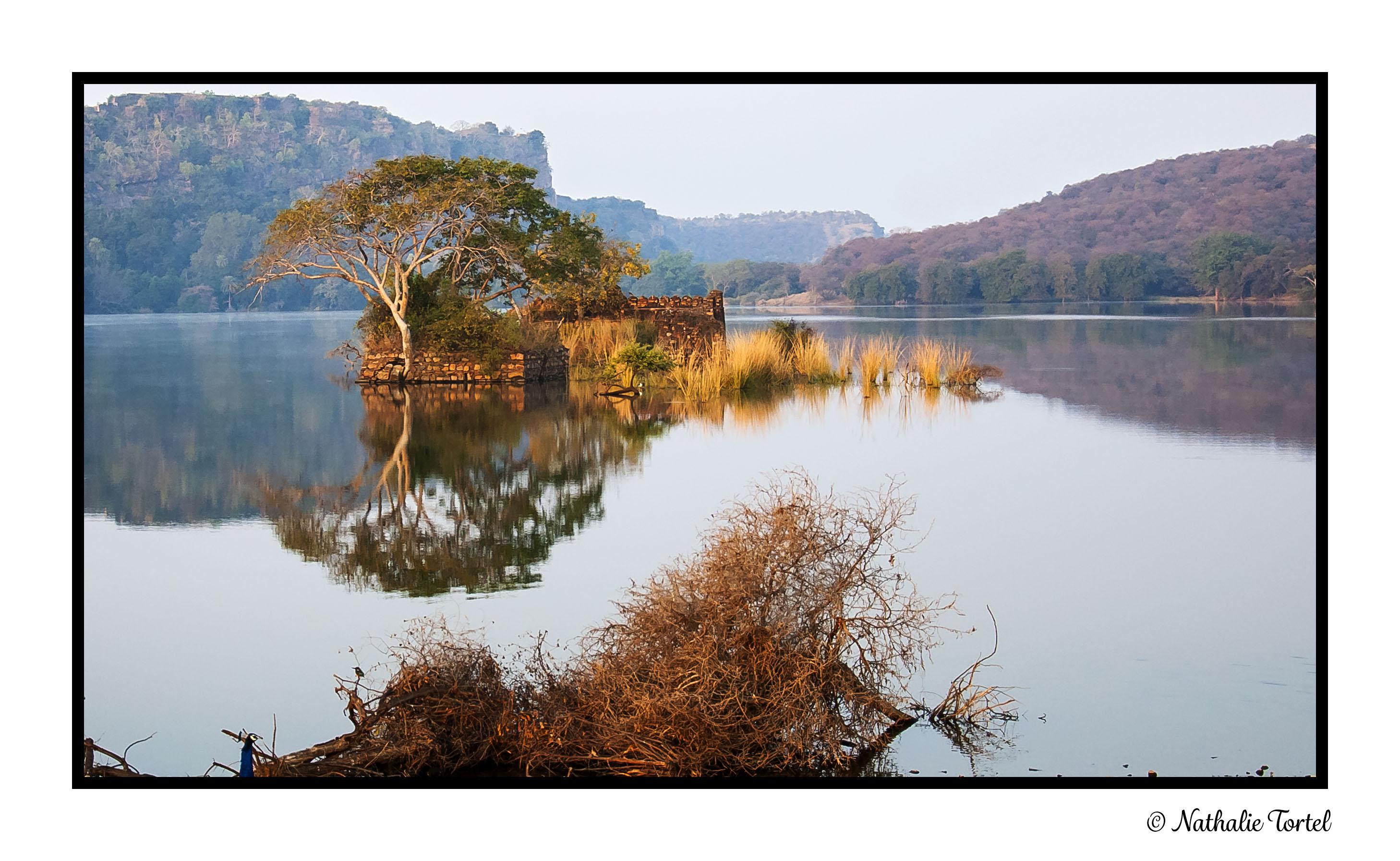Keoladeo National Park Inde