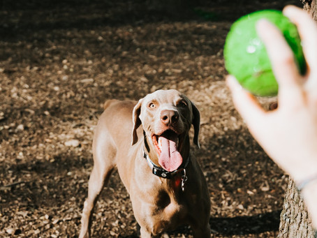 Boston's 5 best dog parks
