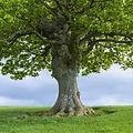 Shady Oak.jpg