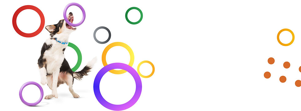 circle_banner_shopping_IL_full---Copy.jp