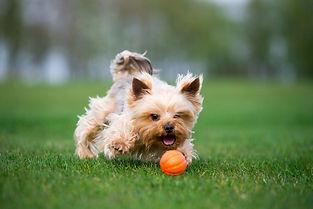 כלב עם כדור לייקר 5