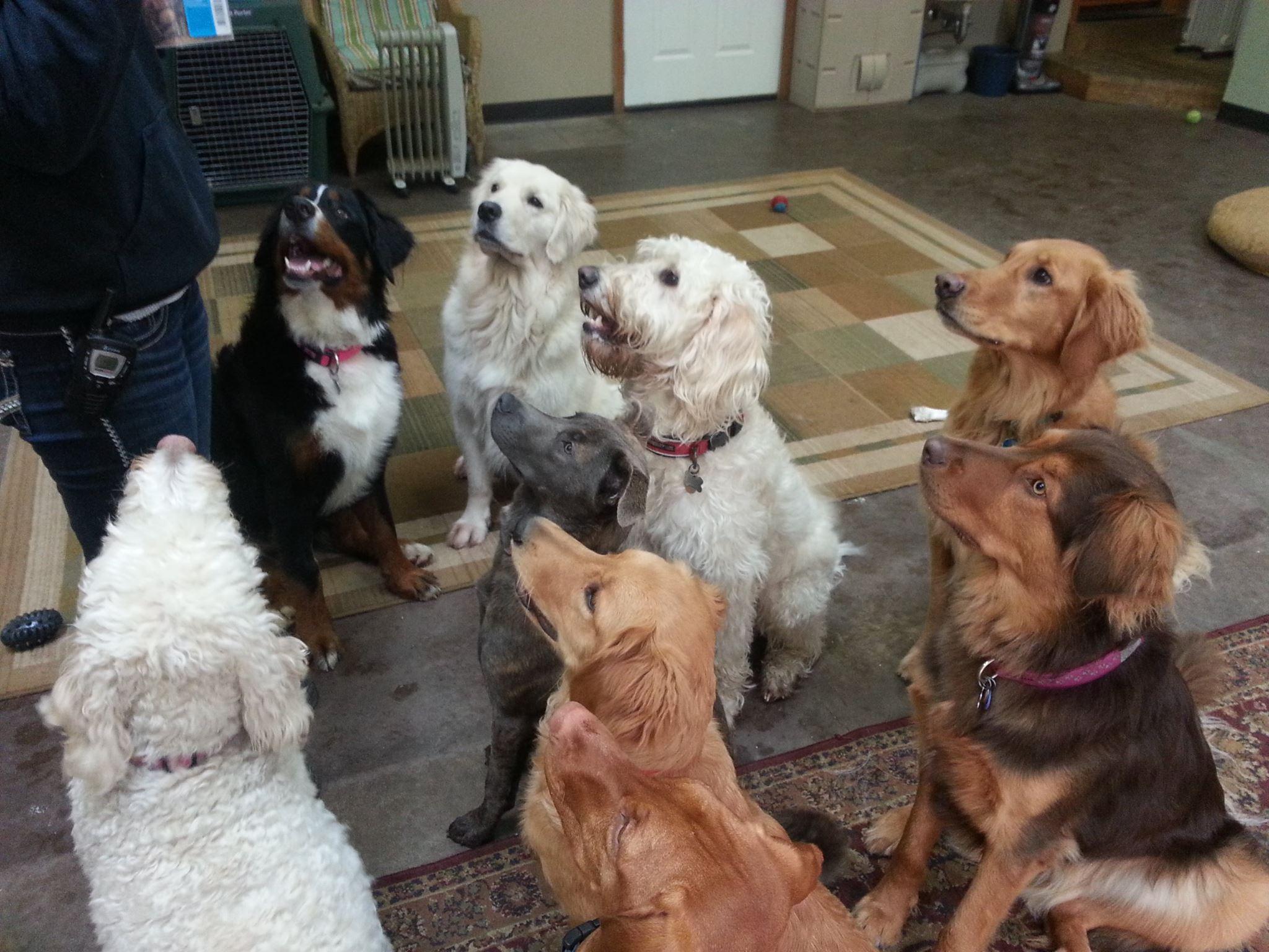 dogwoods party