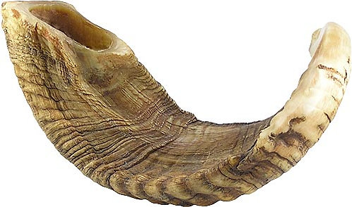 Medium Shofar