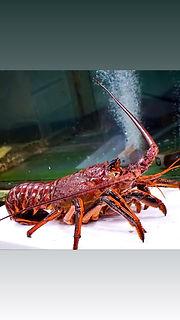 Crustacean-main.jpeg