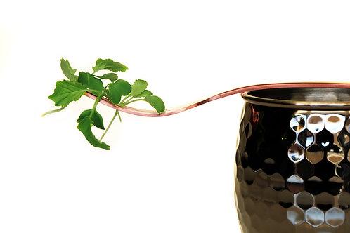 Brassica Blend
