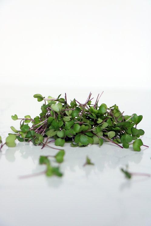 Micro Purple Kohlrabi